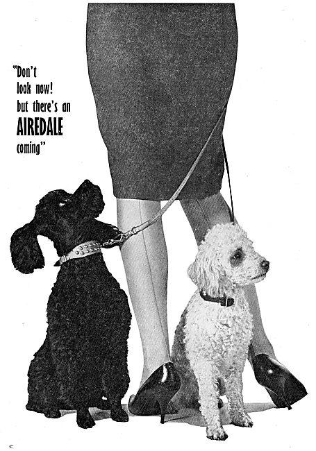 Beagle  Airedale