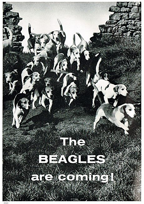 The Beagles Are Coming!